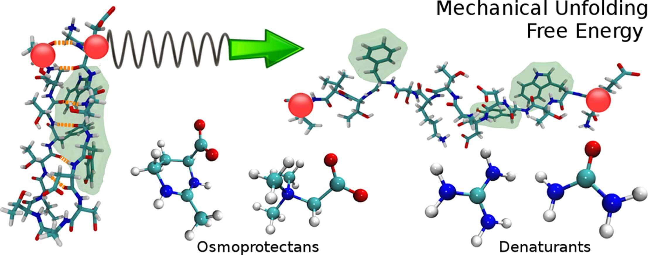 Modelling the effect of osmolytes on peptide mechanical unfolding